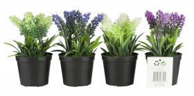 Konstväxt -Lavendel